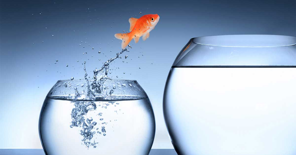 goldfish jumping out of a smaller bowl into a large one
